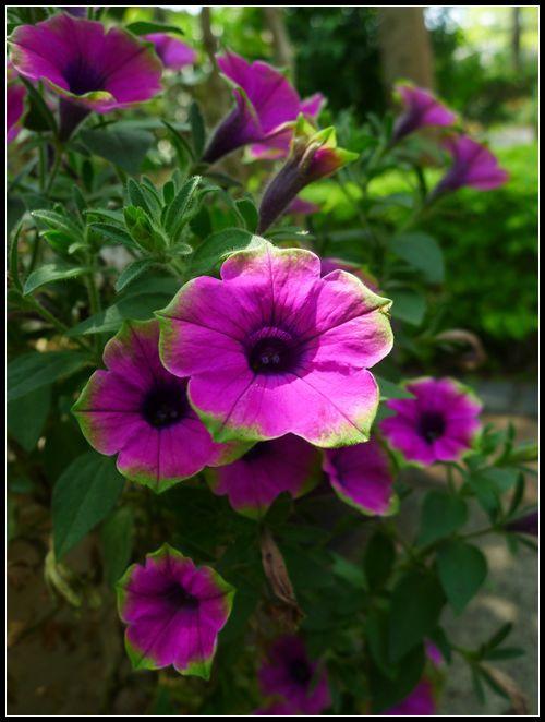 P1560161_副本   小花
