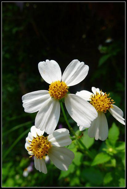 P1560068_副本   小花