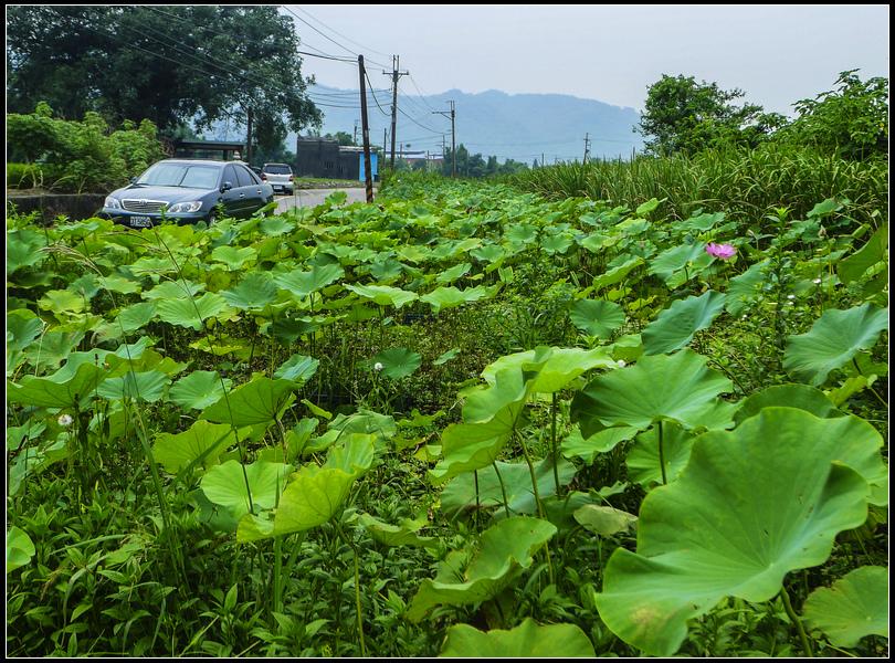 P1580012    菜園~2.