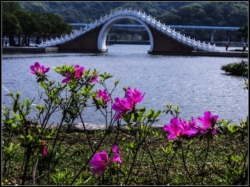 IMG_6877   櫻花