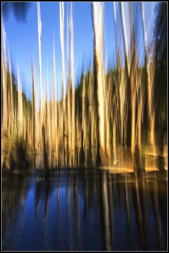 IMG_0866   忘憂森林