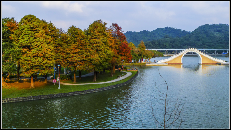 P1680617    大湖落羽松 S