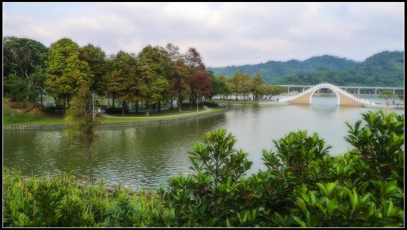 P1680622    大湖落羽松~2. S