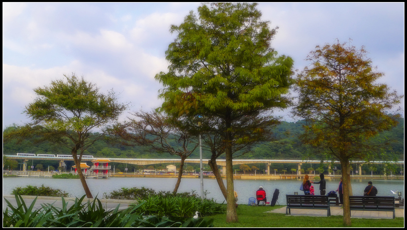 P1680661 大湖落羽松~2 S