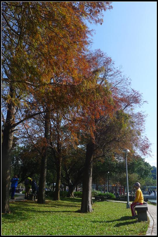 P1700641  大湖公園