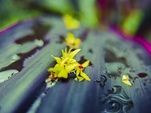 L1020420  秋天的花