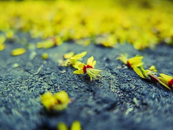 L1020424  秋天的花