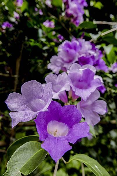 L1020358  L1020366 秋天的花秋天的花