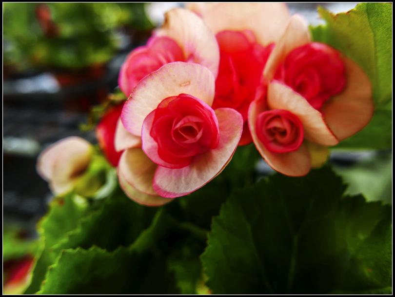 L1020733    秋花