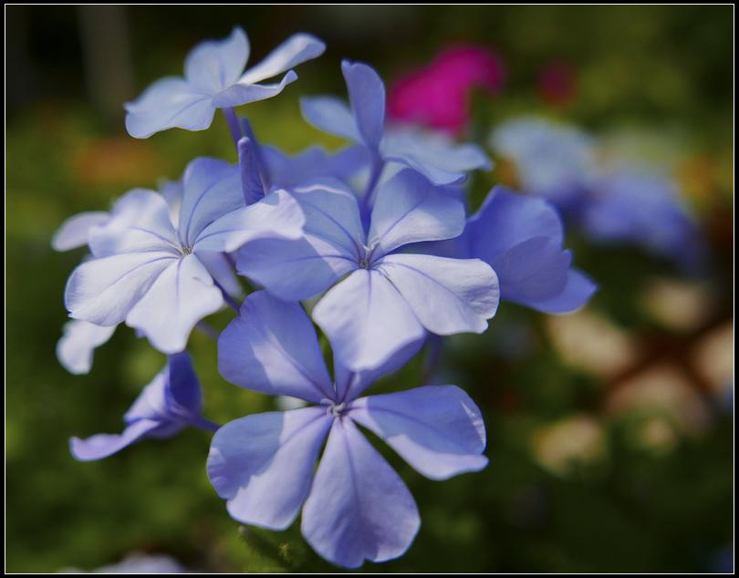 L1020722    秋花