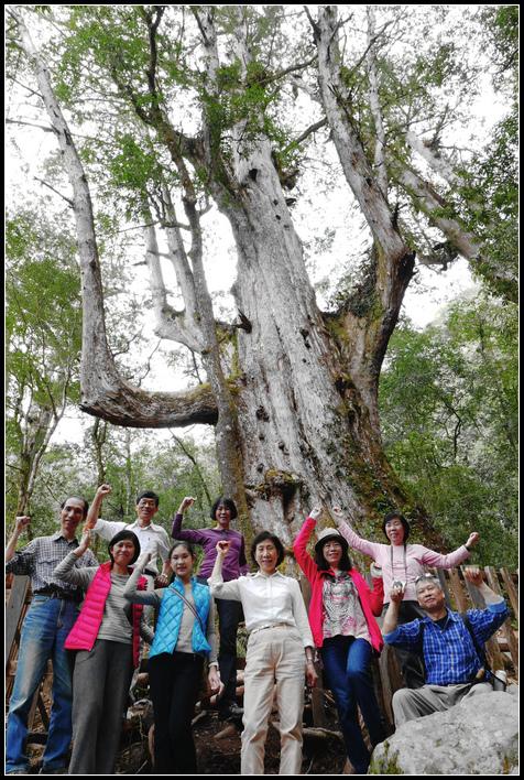 L1840536   大樹