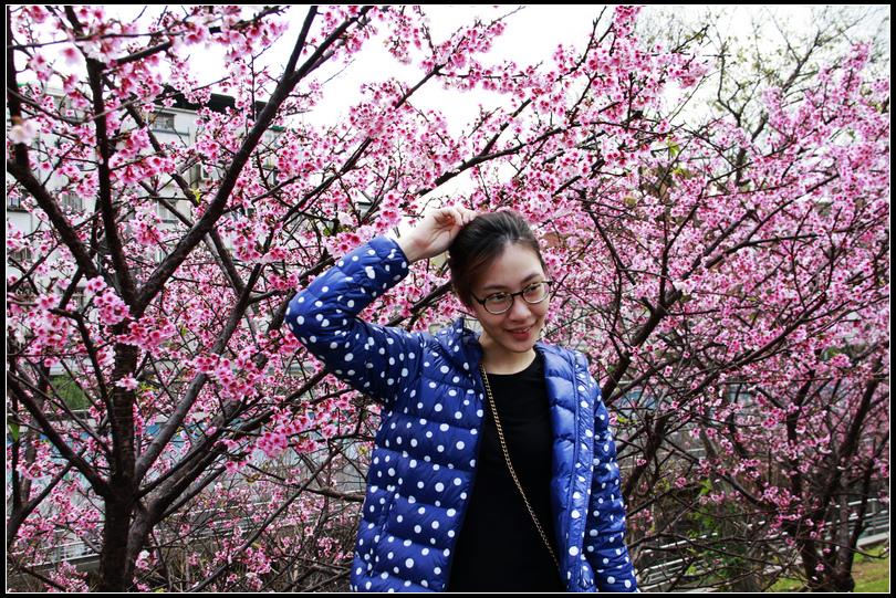 _MG_5468 東湖櫻花
