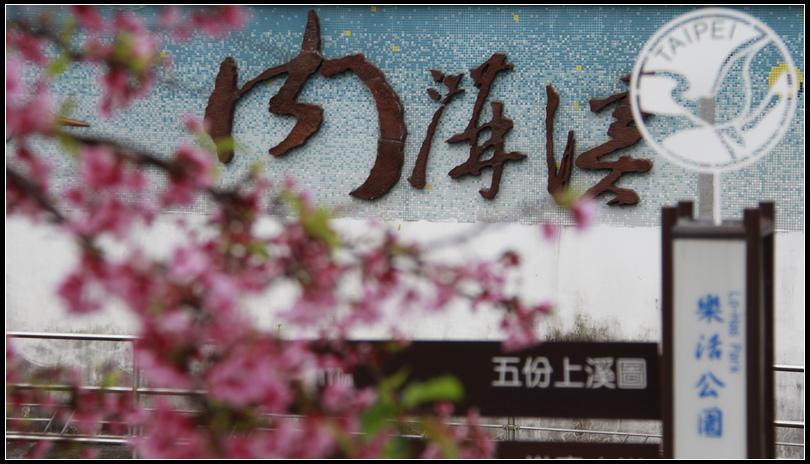 _MG_5518 東湖櫻花