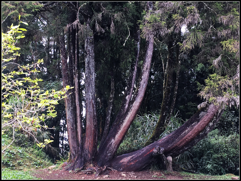 20170401阿里山森林遊樂區_170427_0130阿里山森林