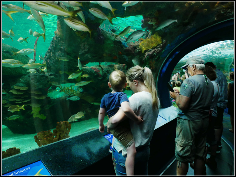L2180870 水族館