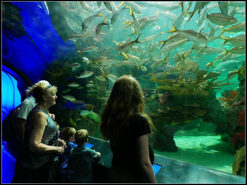 L2180871 水族館