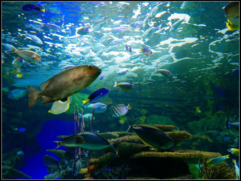 L2180863 水族館