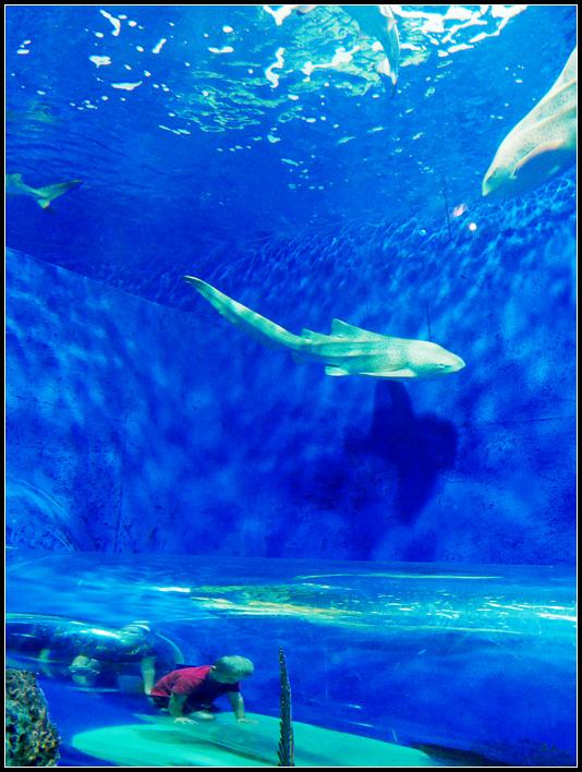 L2190065 水族館