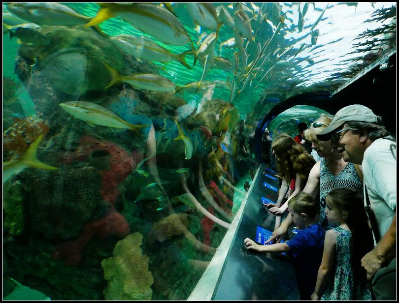 L2180874 水族館