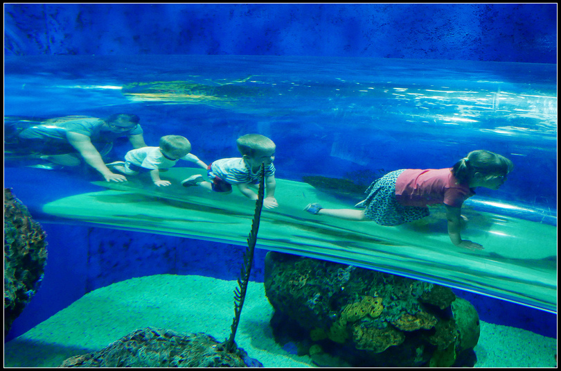 L2190067 水族館