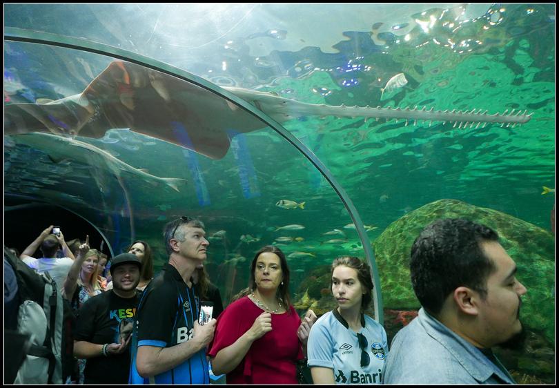 L2190074 水族館