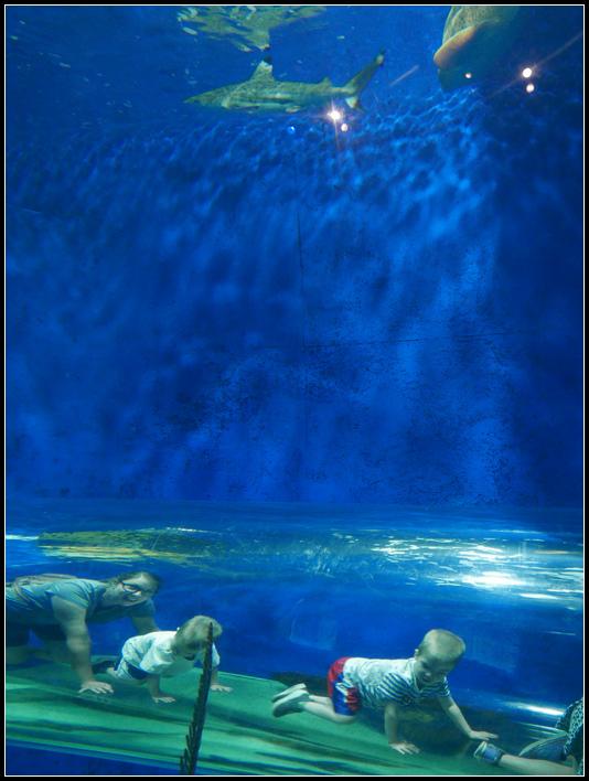 L2190068 水族館