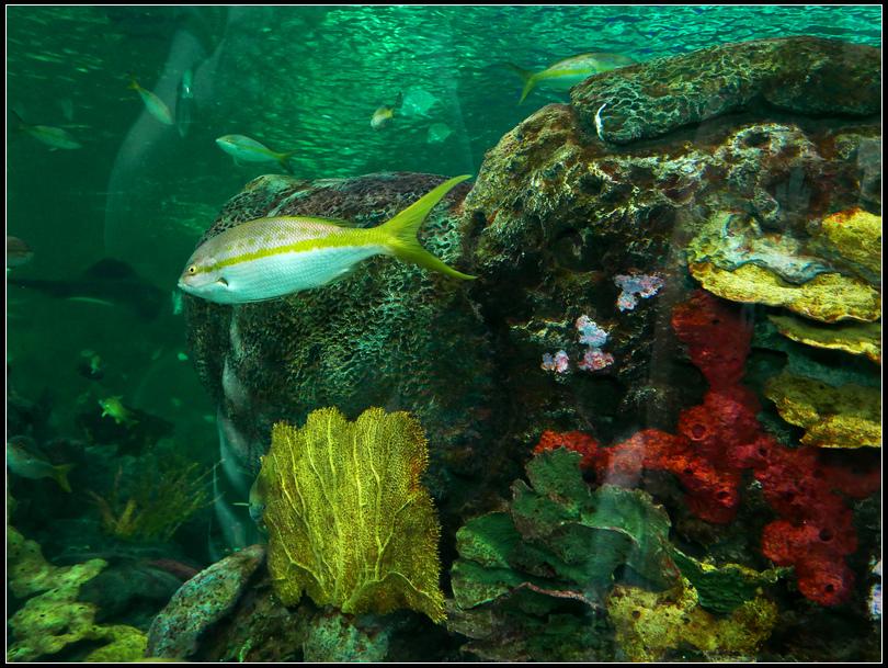 L2190033 水族館