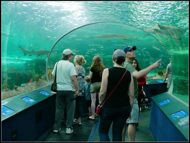 L2190018 水族館