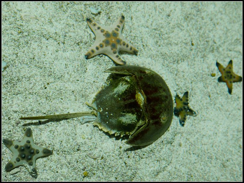 L2310435   海洋公園