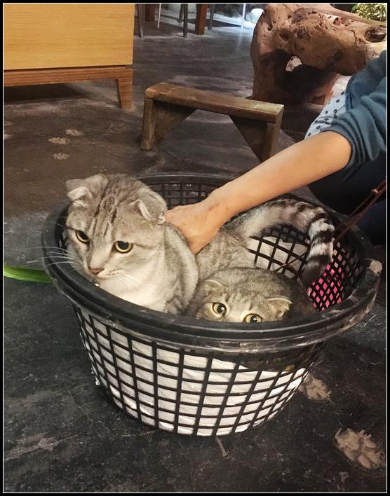 IMG_8361  貓咪~2