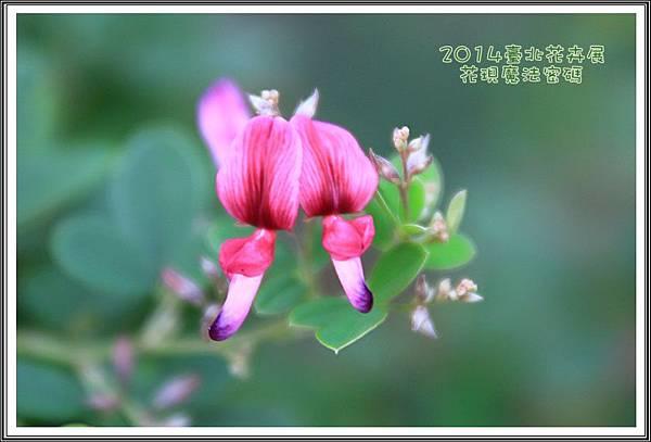 2014臺北花卉展170