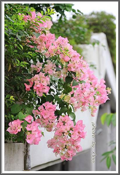 2014臺北花卉展176