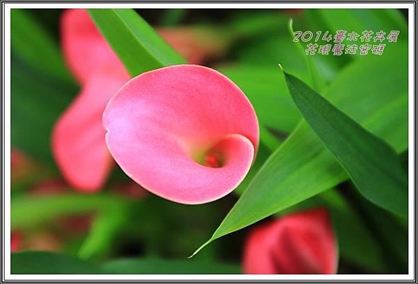 2014臺北花卉展196