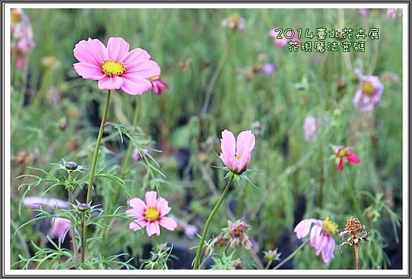 2014臺北花卉展200