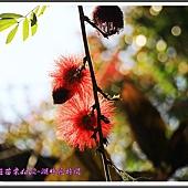 2014春遊苗栗D2113