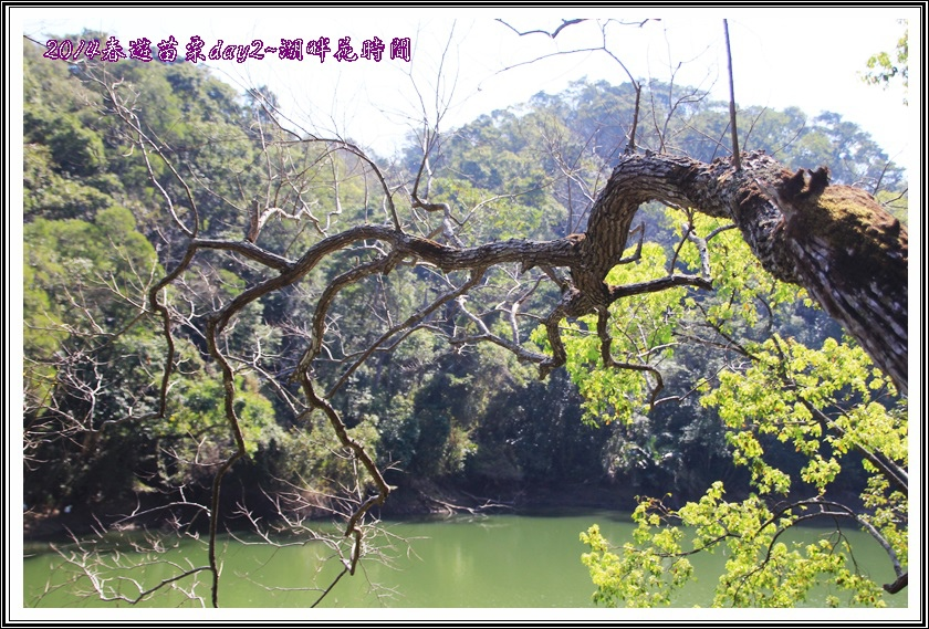 2014春遊苗栗D2120