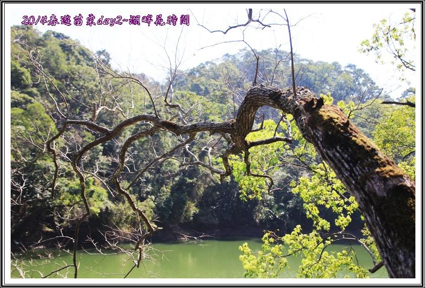 2014春遊苗栗D2119