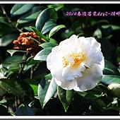 2014春遊苗栗D2125