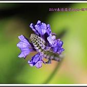 2014春遊苗栗D2128