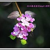 2014春遊苗栗D2148