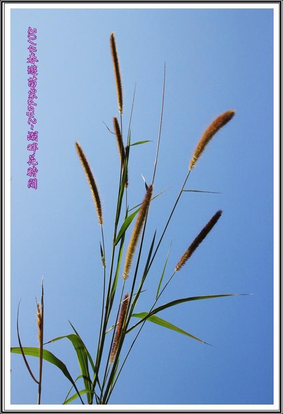 2014春遊苗栗D2153