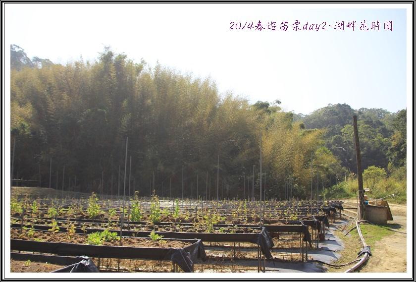 2014春遊苗栗D2154