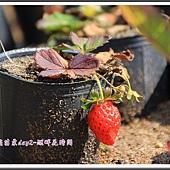 2014春遊苗栗D2157
