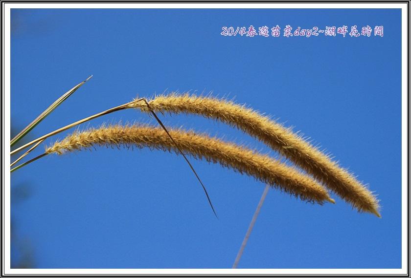 2014春遊苗栗D2159