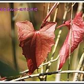 2014春遊苗栗D2141