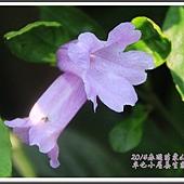 2014春遊苗栗D2197