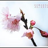 2014春遊苗栗D2196