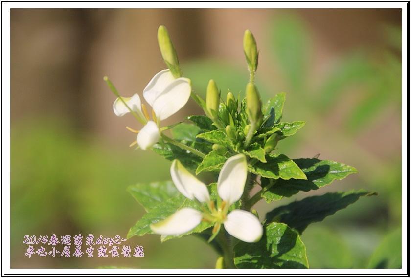 2014春遊苗栗D2199