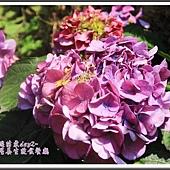 2014春遊苗栗D2201