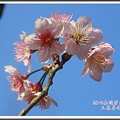 2014春遊苗栗D2202